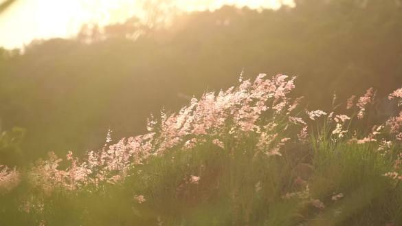 4K唯美风景阳光下的花草树叶视频素材